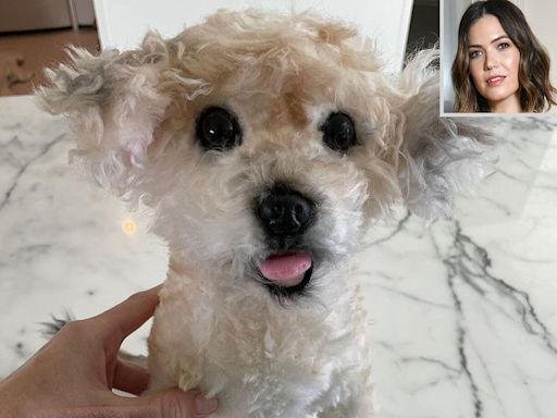 Pregnant Mandy Moore's Husband Gifts Her Replica of Late Dog So Son 'Will Still Know' Family Pup