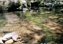 很輕鬆的森林步道-四十二份湧泉自然生態步道 苗栗南庄