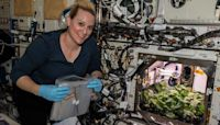 Astronauts harvest radishes grown on the International Space Station