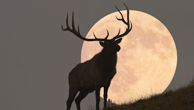 Where and When to See October's Full Moon, the Hunter's Moon
