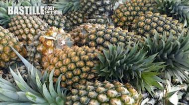 台灣外銷菠蘿屢傳黑心 陳吉仲稱或是新客戶儲存不當   兩岸