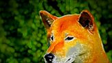 DOGE Army Retreats, Tail Between Legs, as Dogeday Ends With 21% Drop