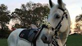 Longtime Lancaster police horse Duke to retire