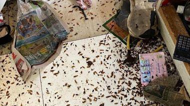 石硤尾邨美賢樓現垃圾屋爆蟲患 逾百曱甴木蝨爬出單位擾民