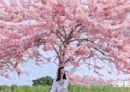 四月花海賞起來!八大花海美景春天不錯過