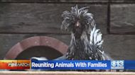 River Fire: Reuniting Animals With Families