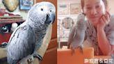 相依為命兒器捐救人 鸚鵡代替他叫媽
