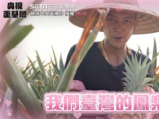 哪裡有毒?鳳梨鼠薯霸氣護愛 告白台灣鳳梨深情貌網全淪陷
