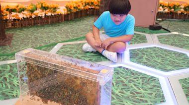 蜜蜂會獨居 跳舞是暗語 本地養蜂人辦展覽分享冷知識