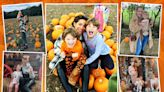 Celebs are going crazy for pumpkins this Halloween with 17m to be sold in UK