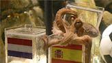 《我的章魚老師》:章魚和人的異同–人有中樞神經 章魚渾身是「腦」