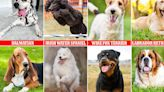 The cutest dog breeds according to an ancient mathematical formula