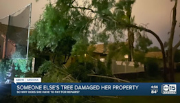 Valley woman faces dilemma after someone else's tree damages her property