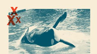 Richard Branson cuts off SeaWorld as debate rages over captive whales and dolphins