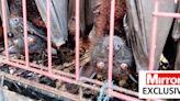 Inside horror wet markets still operating across Asia despite calls to ban them