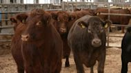 U.K. researchers study genetic link to methane emissions in cattle, key to reducing greenhouse gases