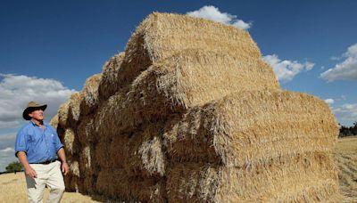 澳洲農業豐收 產值將年增70億 飆至730億元