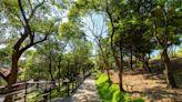 全新賞夜景步道公園新景點!低難度爬山賞景好去處 | 蕃新聞