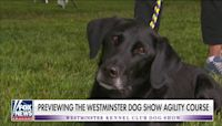Janice Dean previews the Westminster dog show agility course
