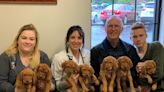 U.S. pet doctors steel themselves for online pharmacy challenge