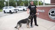 Dog Donates Blood to Fellow Police K-9 Shot While On Duty
