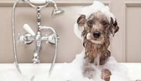 You Need to Dry Your Pup Thoroughly After Each Bath, According to a Vet