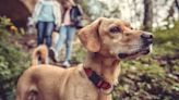 Tick Prevention for Dogs and Cats