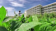 Holiday with fresh herbs at these Cuban hotels