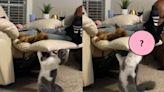 調皮貓想偷打約克夏 竟從椅子下伸手襲擊:94要打你!