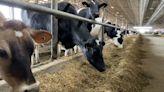 Sen. Schumer seeks more information on Horizon Organic contract termination