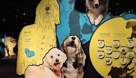 New Museum Of Science Boston Exhibit Going To The Dogs | WBZ NewsRadio 1030