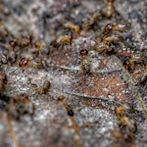 Termites by Flickr user Gnilenkov Aleksey
