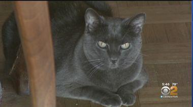 New Vaccine For Cat Allergies