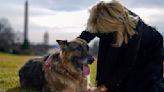 Bidens Announce Death of 'First Dog' Champ   U.S. News®   US News