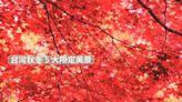 秋冬限定景色!盤點 5 大美景錯過還要再等一年