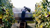 Here's What You Need to Know About Europe's Historically Low Wine Harvest