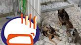 38次地震搖不停!家裡6狗「緊張輪流跑廁所」 媽整晚忙著打包