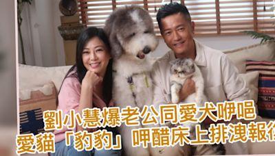 劉小慧爆老公同愛犬咿唈 愛貓「豹豹」呷醋床上排洩報復