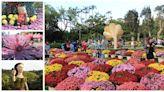 【台北】2019士林官邸菊展,融入古典與流行歌曲的造景花藝展,周杰倫、五月天、蘇打綠歌曲都來了