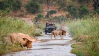 South Africa's truly ethical safaris