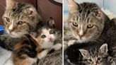 年老浪浪心疼幼貓沒家 「見一隻收一隻」暖心當爸!