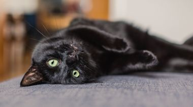 Jackson Galaxy Reveals The Biggest Thing People Get Wrong About Cats