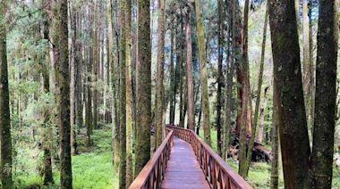 7/27降二級警戒!17森林遊樂區、2植物園將開放