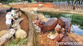 全台唯一!DIY自製草球餵河馬 六福村互動體驗超級FUN   蕃新聞