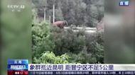 Elephants approach Chinese city after 500km journey