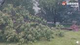 「煙花」再登陸 上海遭最強風力 局部持久停電