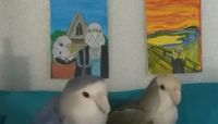 This artist created a miniature museum for her birds