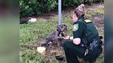 將爪子放在警官手裡的受虐棄犬 有了新家