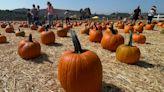 Eco-tip: Managing Halloween waste in an unusual year