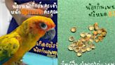 鸚鵡吞21顆鑽石急送醫 下場慘遭「剖腹」